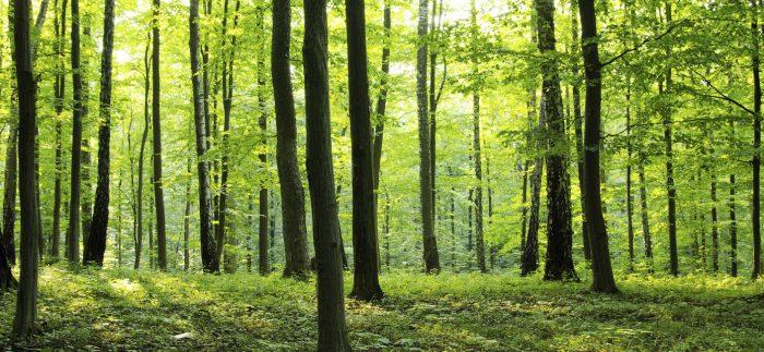 Az egyik legrégebben alkalmazott megújuló nyersanyagforrásunk: a fa